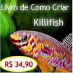 Ebook-como Criar Killifish