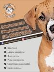 Adestramento de Cães Jacareí