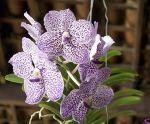 Conheça o Segredo do Cultivo das Orquídeas Curso Completo em Vídeo mais Manual Completo