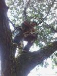 cortador de árvores