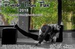 Studio Pole Dance Cleo Meneses - Arthur Alvim - Todas Flex 2018