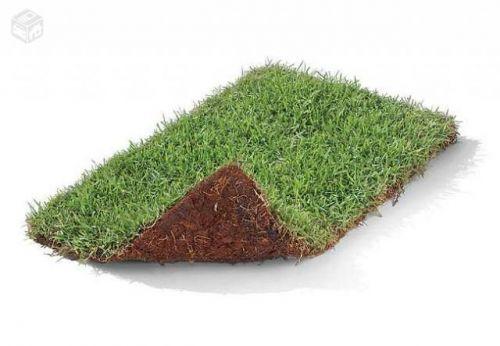 Platium Grass - Grande promoção de grama esmeralda grama são carlos grama bermudas e grama zeon 141107