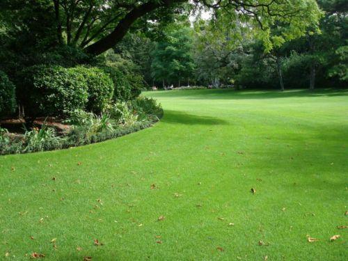 Platium Grass - Grande promoção de grama esmeralda grama são carlos grama bermudas e grama zeon 141111