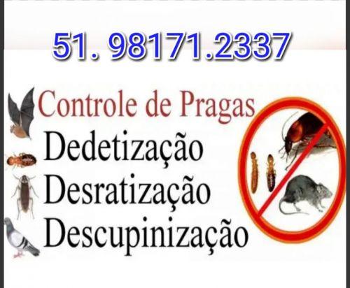 Controle de Pragas em Porto Alegre e Regiões do Rs 563965