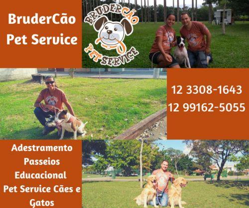 Dog Walker Passeio Recreativo e Educacional São José dos Campos 498763