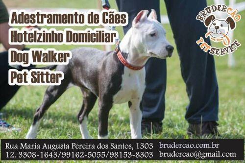 Dog Walker São José dos Campos 498201