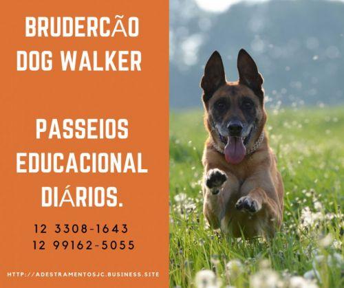 Dog Walker São José dos Campos Brudercão 498771