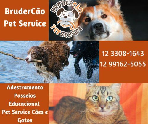 Dog Walker São José dos Campos Brudercão 498772
