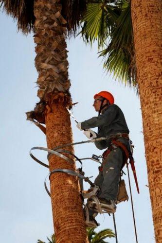 Resultado de imagem para subindo uma árvore
