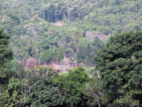 Fazenda Curukrutu 30.000mtssão Paulo. 377302