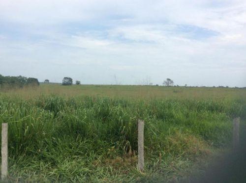 Fazenda   Em  Juína Mt    Venda    Excelente  investimento 436571