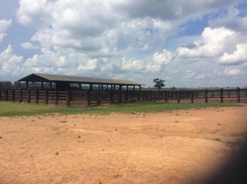 Fazenda   Em  Juína Mt    Venda    Excelente  investimento 436575