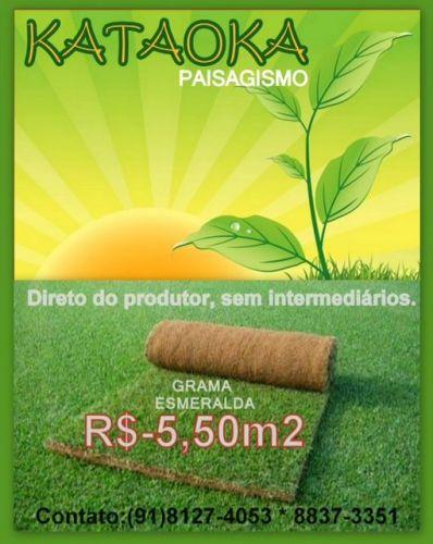 Grama Esmeralda 218323