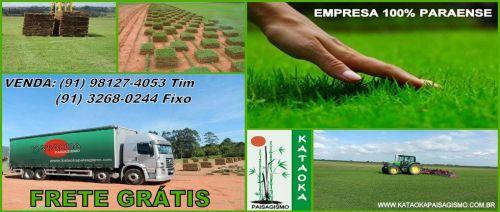 Grama Esmeralda 218325