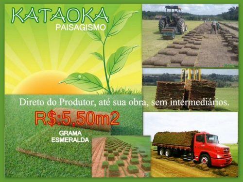 Grama Esmeralda 218327