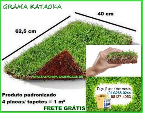 Grama Esmeralda Natural Frete gratis 308861