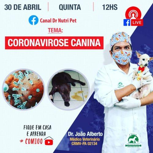Serviço Veterinário em Ananindeua  549608