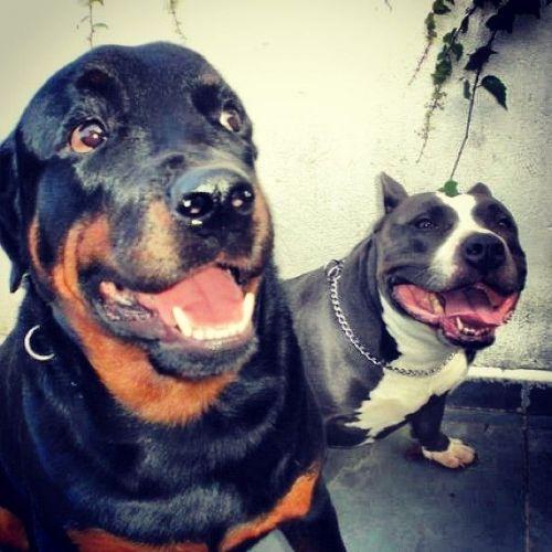 Transporte de Animais de Estimação Anjos da Guarda Pet Taxi e Dog Walker  230501