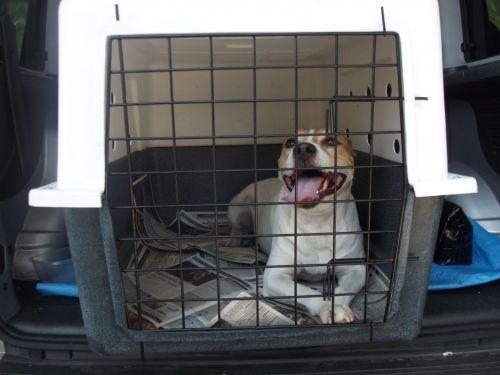 Transporte de Animais de Estimação Anjos da Guarda Pet Taxi e Dog Walker  230502